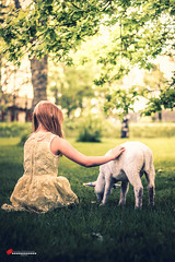 LOVE (salas-3) Tags: lamb lambs girl summer portrait animal nikon photography dress garden trees grass light natural story storytelling