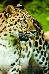 Animals_170