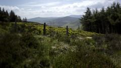 looking South HFF! (Wendy:) Tags: green fence wire heather hills wicklow barbed conifers heathland tiltshift hff nikcoloureffects verticalplane