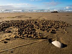 AV2016-1811 (Alanv 1955) Tags: sunset australia places nsw beaches newsouthwales genre portmacquarie