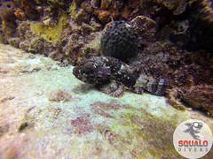 Scuba Diving-Miami, FL-Jun 2016-14 (Squalo Divers) Tags: usa divers florida miami scuba diving padi ssi squalo divessi