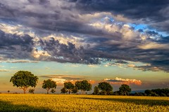 Every cloud has a silver lining... (AHO66) Tags: summer tree clouds germany landscape deutschland cloudy sommer feld felder wolken landschaft gewitter baum wolkig sturm niedersachsen barsinghausen barrigsen