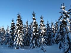 Winter magic (echumachenco) Tags: schnee trees winter snow germany deutschland saxony sachsen bäume erzgebirge altenberg cinovec