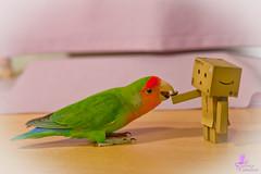 Damboo da un semino a Ciuky (Silvia Catalano) Tags: pappagallo ef2470mmf28lusm pappagallino inseparabile danboo 5dmarkll