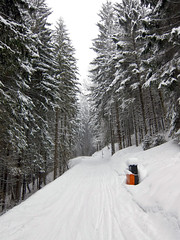 Sledding Track (Nataraj Metz) Tags: schnee trees winter mountain snow alps forest canon germany bayern deutschland bavaria europa europe berge sledding alpen rodeln wald bume deu gebirge allgu oberallgu allgueralpen alpmountains badhindelang imbergerhorn powershots95