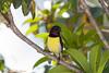 IMG_6740L4 (Sharad Medhavi) Tags: bird canonef100400mmf4556lisusm canoneod50d birdsandbeesoflakeshorehomes