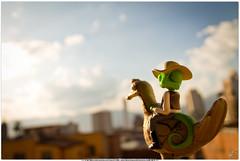 Fotografía Macro / Rango bajando a Medellín desde Santa Elena (Juan Camilo Bedoya Vargas) Tags: blur macro canon eos rebel canonrebel t3 sharpen medellin medellín lightroom fotografía camaleon rango 1100d fotografíamacro rebelt3 eos1100d photoshopenfoque rangohd