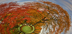Beech Planet I (Andreas Krappweis - thanks for 1,9 million views!) Tags: park strange forest weird perspective planet beech perspektive sphericalpanorama kugelpanorama englischergartenmnchen