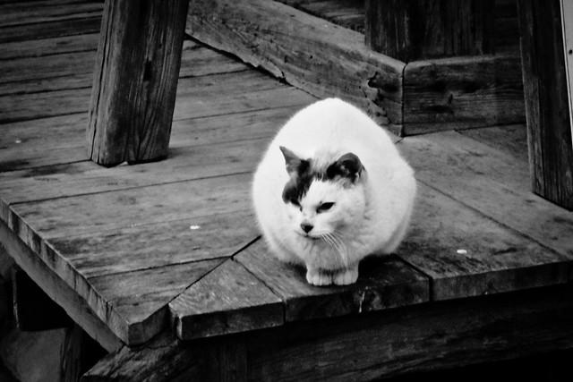 Today's Cat@2012-02-19