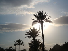 Iraqi dates palms (Mz Watan) Tags: sky nature clouds iraq palm baghdad dates