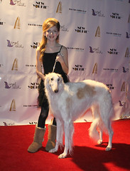 show new york city dog yorkie westminster fashion angel canine doggy leash russian runway kennel borzoi wolfhound