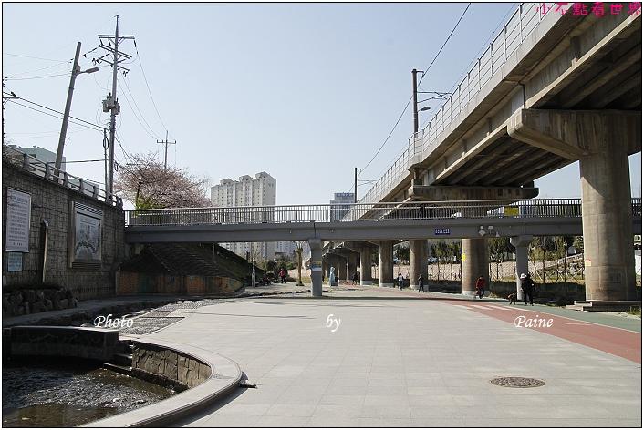 東萊賞櫻步道 (2).JPG