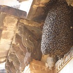 "Beehive at Chatturbuj Mandir <a style=""margin-left:10px; font-size:0.8em;"" href=""http://www.flickr.com/photos/14315427@N00/6922748915/"" target=""_blank"">@flickr</a>"