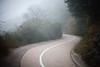 My way is foggy (Stanley Au) Tags: sky plant tree canon hongkong eos 50mm foggy hong kong 5d moodcreations