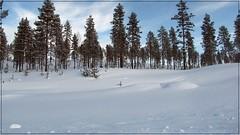 Orrd sn / Untouched snow (HJsfoto) Tags: winter snow nature landscape vinter natur 1001nights landskap