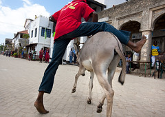 Man Riding donkey During Maulidi Donkey Race, Lamu, Kenya (Eric Lafforgue) Tags: africa street motion color fall horizontal island photography kenya culture competition unescoworldheritagesite riding afrika tradition lamu challenge swahili afrique eastafrica qunia lamuisland lafforgue traveldestination africanethnicity kenyaafrica muslimislam  qunia  barefootbarefoot  112036  kea exterioroutdoors   tradingroute blackethnicity a herbivorousmammalanimal donkeymuleanimalsmammalshebivorous