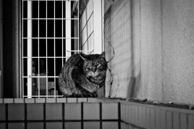 Today's Cat@2012-03-02