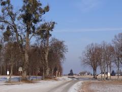 just another perfect day in Hesse (JoannaRB2009) Tags: road blue trees winter sky snow nature germany alley path natura avenue zima niebieski droga aleja śnieg hesse przyroda niebo drzewa niemcy calden ścieżka wilhelmsthal kalden hesja mygearandme