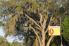 sunbeamsign (FAIRFIELDFAMILY) Tags: ocean old family trees gay boy sky jason man flower tree beach sc nature water grass sign st vintage river carson children bread island tin living store moss oak bush natural brothers antique live grant south low country salt young michelle southern azelea spanish coastal taylor carolina seafood myrtle marsh helena oaks beaufort sunbeam lowcountry ridgeland batesburg