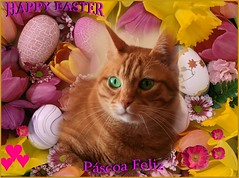 Happy Easter // Pscoa Feliz (Chrismatos Too busy, sorry) Tags: park pink blue red white color macro green nature animals yellow cat canon easter fun places gatos gatti poses