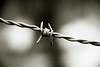 tie the knot / 刺钢丝 (aelena) Tags: metal wire iron 铁 线 金属 单色画 淡色照片