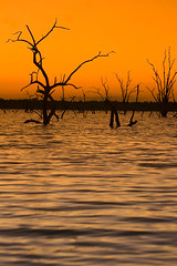 The living moment is everything. (Aristocrats-hat) Tags: trees sunset orange dead waves silhouettes ripples kariba boozecruise crocinfested