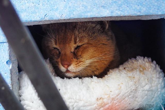Today's Cat@2014-04-10
