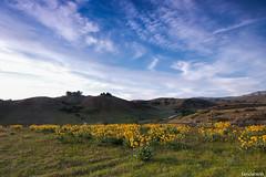 Jog in the sea of wild flowers (fandarwin) Tags: flowers wild fan darwin olympus panasonic idaho boise trail zuiko jog 918 uwa gf1 fandarwin