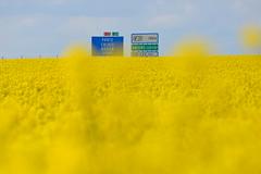 Sortie 31 (Explore du 1er Mai 2014) (JDAMI) Tags: paris france fleur yellow jaune nikon explore amarillo sortie autoroute 80 pancarte amiens panneau calais picardie somme 70300 colza d600 a29