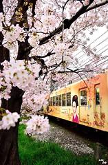 Sakura Train (Clonedbird  & Iris ) Tags: japan train nikon kyoto explore   sakura    2016 randen   d810
