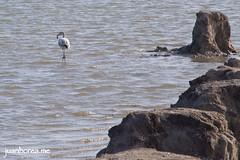 Caminando por las salinas (juanhorea.me) Tags: sea espaa mar spain murcia mediterraneansea sanpedrodelpinatar salinasyarenalesdesanpedrodelpinatar marmediterrrneo