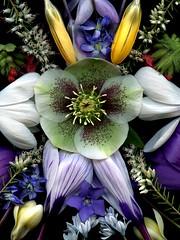 57276.02 spring flowers (horticultural art) Tags: flowers spring crocus bouquet scilla helleborus pulmonaria calluna puschkinia horticulturalart