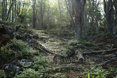 5C4A1047 (Kieran R Healy - KRH ImageWorks) Tags: trees del ushuaia ethereal backlit fuego tierra