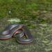 Western Wormsnake (Carphophis vermis)