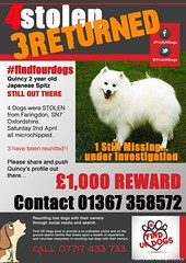 Sat, Apr 2nd, 2016 Lost Male Dog - Stanford Road, Faringdon, Not applicable (Lost and Found Pets Ireland) Tags: road dog lost stanford april applicable 2016 lostdogstanfordroadnotapplicable