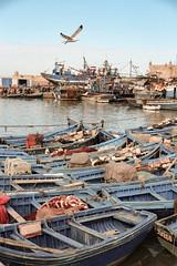 #1pictureAday (e-maujean) Tags: blue sea port boats fishing pastel morroco seagul canon600d