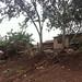 Aburi village