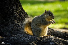 Squirrel (Huffy1166) Tags: highqualityanimals