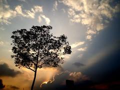 Bogota Sunset (Campanero Rumbero) Tags: sunset sky sun sol nature clouds arbol atardecer colombia bogota cielo nubes