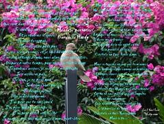 Message personnel  (lihy.com) Tags: love nature rose thanks y dancing merci arts danse valentine artsy romantic valentin valentinesday lovenature amiti rosey valentino amoureux saintvalentin greetingcards  natureart romantique loveart dancingflower artlove ylove  messa