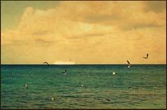 Gulls (navejo) Tags: sea water clouds mexico waves gulls cruiseship caribbean cozumel buoys 2011 navejo