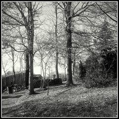 Polypan F in Diafine (2) (mikeinlagardette) Tags: trees plants yellow 35mm garden square minolta filter diafine jpg oaks 24x24 polypanf twobath 24rapid gupr 32mmrokkor