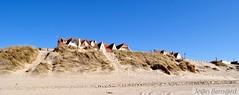 Les dunes de Merlimont