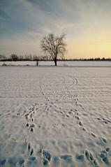 (Claudio Morlok) Tags: winter sunset italy snow tree gelo landscape nikon frost tramonto country wide natura tokina campagna albero inverno lombardia paesaggio d90 1116 morlok claudiomorlok