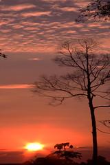 Pohon Kering dan Matahari (anwarsiak***sibuk***) Tags: sumatra indonesia senja sore matahari riau siak pohon kering blinkagain rememberthatmomentlevel1 rememberthatmomentlevel2