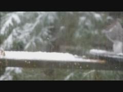 Squirrel Feeder Movie (americasroof) Tags: snow feb11 201202