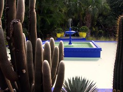 Marrakech :: Jardin Majorelle (Waldir PC  Ana Claudia Crispim) Tags: africa morocco maroc marrakech marrakesh marrocos donana waldirpc