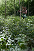 "[Création] Langue des Bois - Cie Huppée / Eguisheim / 13.06.10 • <a style=""font-size:0.8em;"" href=""http://www.flickr.com/photos/30248136@N08/6890988449/"" target=""_blank"">View on Flickr</a>"