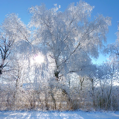 The beauty of a weeping willow tree in the winter (Bn) Tags: blue trees winter sky sun white snow hot cold tree ice coffee amsterdam forest walking geotagged topf50 frost crystals paradise quiet path air skating dream freezing 10c sunny fresh clear crisp willow freeze enjoy layer backlit temperature wintertime wonderland whitesnow topf100 invigorating weeping pleasure colder absorbed sportpark ripe hoar degrees noord exhilarating wintry celcius energizing treurwilg 100faves 50faves zunderdorp buikslotermeer buikslotermeerdijk zwartegouw weeren geo:lat=52401903 geo:lon=4958804