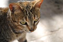 Why don't you look at me ? (SalmaZag') Tags: animal cat chat morocco maroc medina oldcity rabat oudaya